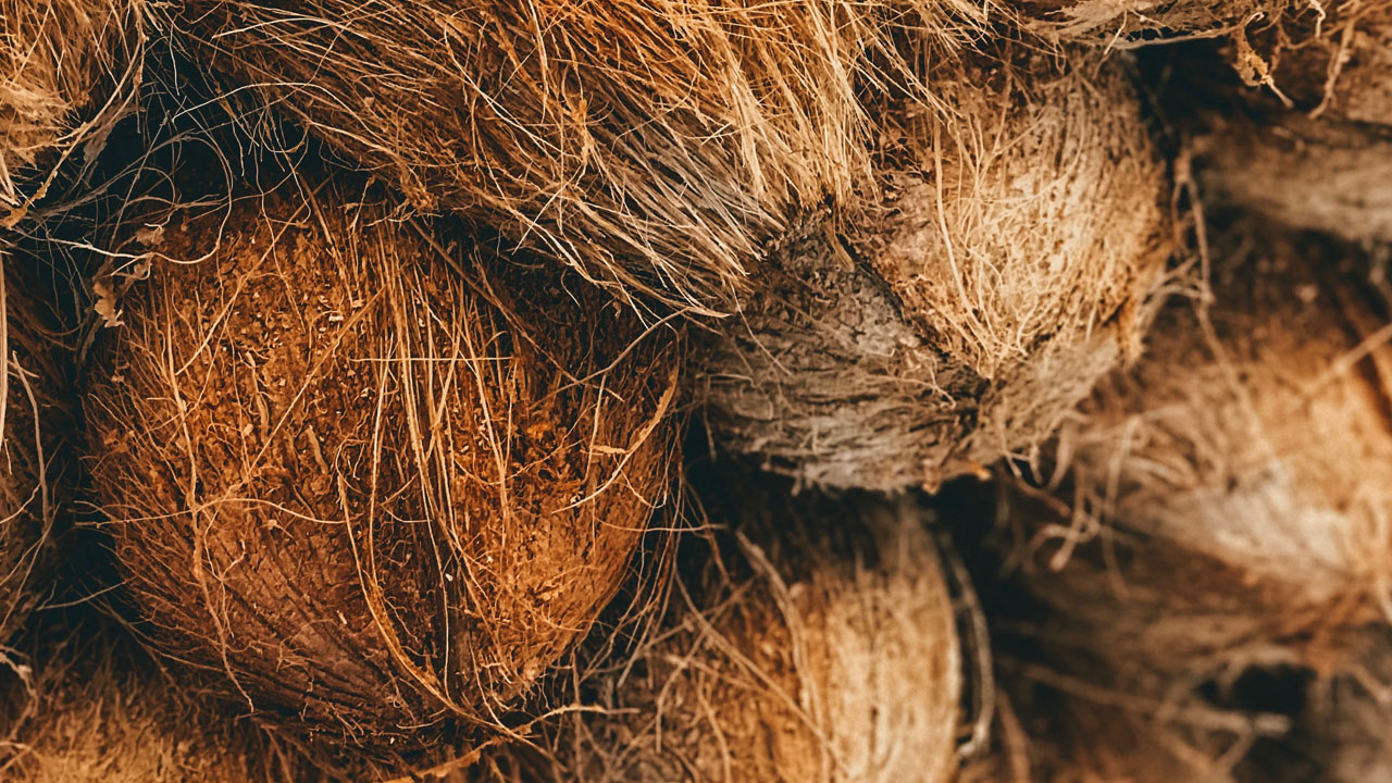 kahverengi hindistan cevizi
